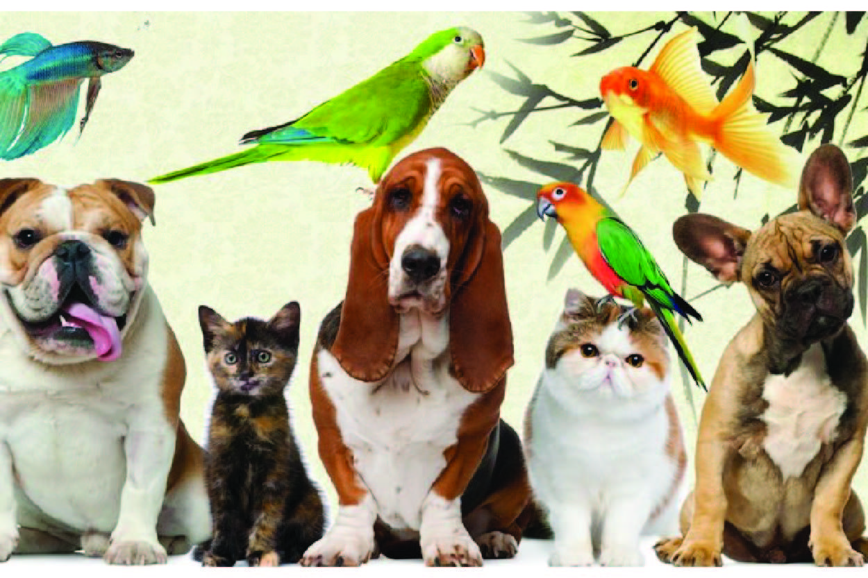 Pet Shop İçin Müşteri Takip Programı